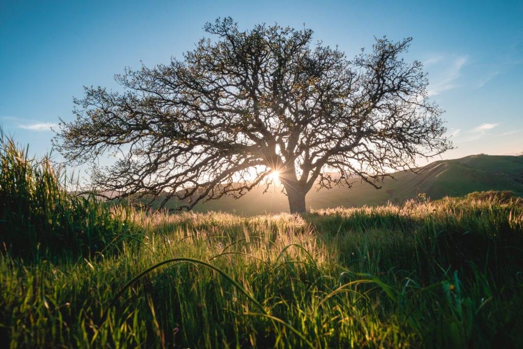 HOME-ranch in balance box- Oaks Spring-20190321-ACA_5752