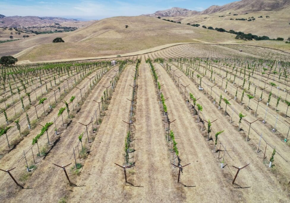 Paicines Ranch Vineyard Phase 1 Aerial