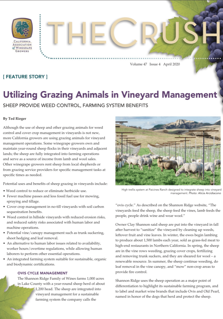 The Crush - April 2020 - Vineyard Design for Sheep Grazing - Paicines Ranch
